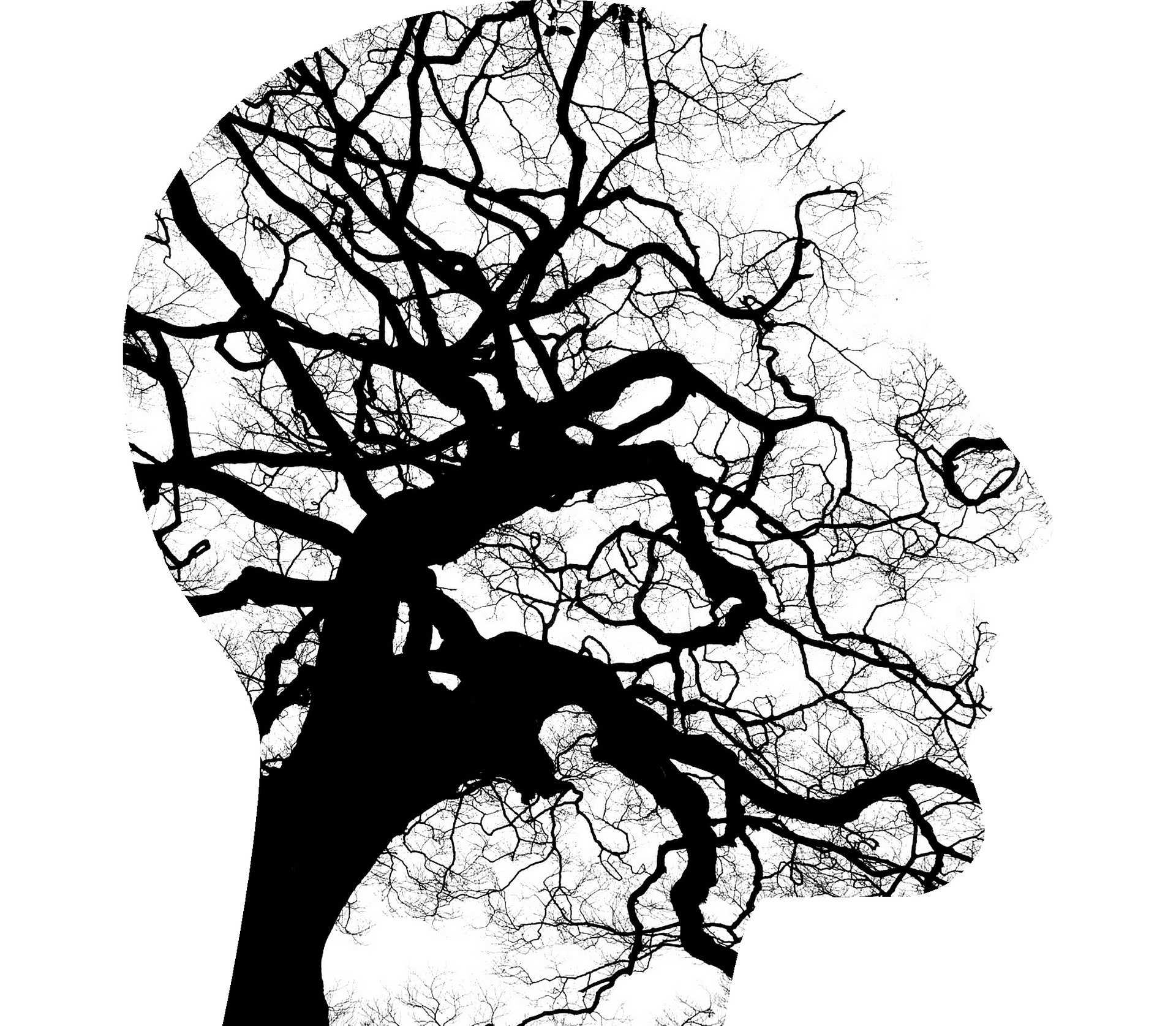 Neurons as tree branches
